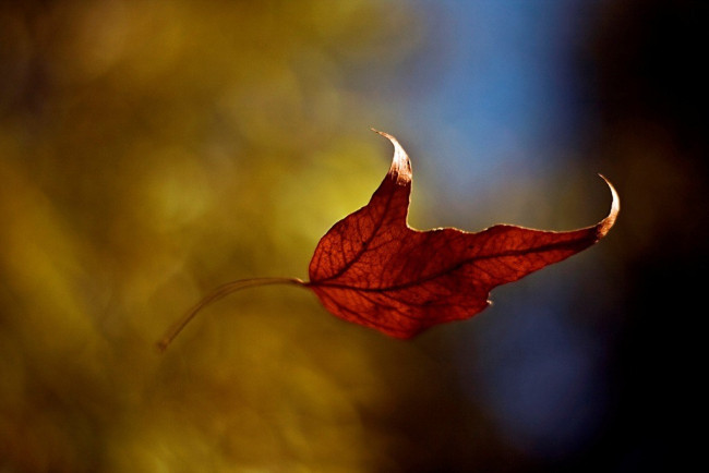 Falling Leaf Be a Leaf Positivity Inspiration Life Daily Motivation quickmeups